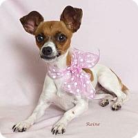 Adopt A Pet :: Raine - Kerrville, TX