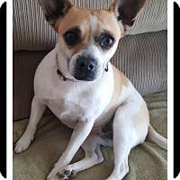 Adopt A Pet :: LULU - Winchester, CA