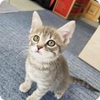 Adopt A Pet :: Homestead - Mission Viejo, CA