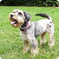Adopt A Pet :: Sydnee - Mocksville, NC