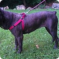 Adopt A Pet :: Chloe - Roaring Spring, PA