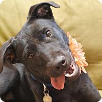 Adopt A Pet :: Maggie - Homewood, AL