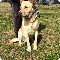 Adopt A Pet :: Poncho - Greeneville, TN