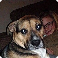 Adopt A Pet :: Zoey - Bardonia, NY