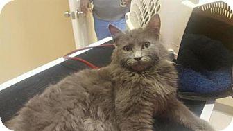 Domestic Longhair Cat for adoption in Baltimore, Maryland - Albert - Pending Medical