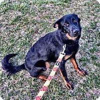 Adopt A Pet :: Coco - North Brunswick, NJ