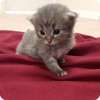 Adopt A Pet :: Marie $125 - Seneca, SC