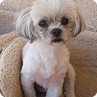 Adopt A Pet :: Bobby - Acton, CA