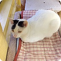 Adopt A Pet :: Geo - Lake Charles, LA