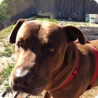 Adopt A Pet :: Hank - Santa Monica, CA
