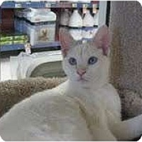 Adopt A Pet :: Bianco - Phoenix, AZ