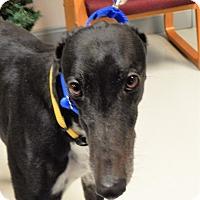 Adopt A Pet :: Tinney - Florence, KY