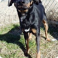 Adopt A Pet :: Gus - Terrell, TX