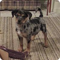 Adopt A Pet :: Radar - Bedford, VA