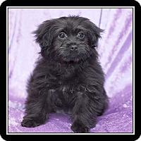 Adopt A Pet :: Lia - San Diego, CA