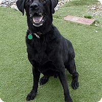 Adopt A Pet :: Sequoia - Midlothian, VA