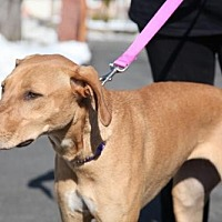 Adopt A Pet :: Eve - Female only household - Rowayton, CT