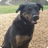 Adopt A Pet :: Duke - Hawk Point, MO