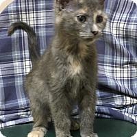 Adopt A Pet :: Starling - Americus, GA