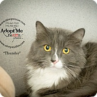 Adopt A Pet :: Thunder - Gardnerville, NV
