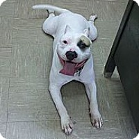 Adopt A Pet :: Clarence the Clown - Willington, CT