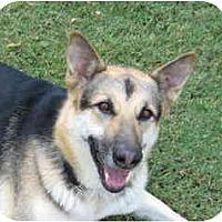 Adopt A Pet :: Rose - Pike Road, AL