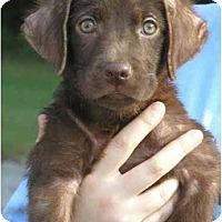 Adopt A Pet :: Lady - Pembroke Pines, FL