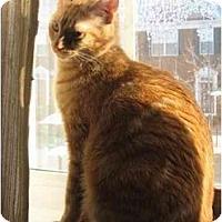 Adopt A Pet :: Pete - Greenville, SC