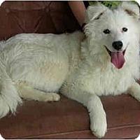 Adopt A Pet :: Jules - Arvada, CO
