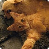 Adopt A Pet :: Tuffy - San Jose, CA