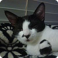 Adopt A Pet :: Star - Seminole, FL