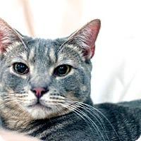 Adopt A Pet :: Pop - Alexandria, VA