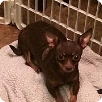 Adopt A Pet :: Selena - Mesa, AZ