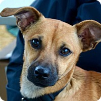 Terrier (Unknown Type, Medium) Mix Dog for adoption in Sunnyvale, California - Tupelo