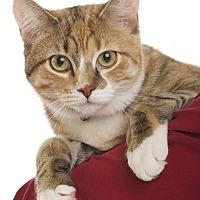 Adopt A Pet :: Cinnamon - Wayne, NJ