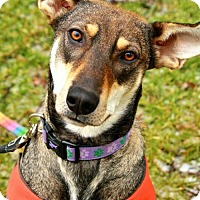 Adopt A Pet :: Josie - London, ON