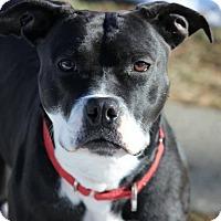 Adopt A Pet :: Asia - Pompton Lakes, NJ