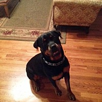 Adopt A Pet :: Riley (Independent Adoption) - White Hall, AR