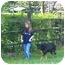 Photo 4 - German Shepherd Dog/Labrador Retriever Mix Dog for adoption in Petersburg, Kentucky - BJ