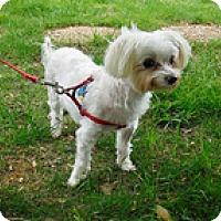 Adopt A Pet :: Truman - Madison, WI