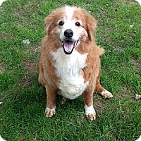 Adopt A Pet :: Donovan - Abingdon, MD