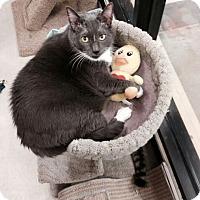 Adopt A Pet :: Prissy - Chesapeake, VA