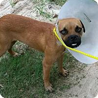 Adopt A Pet :: Otis - East Hartford, CT