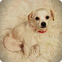 Adopt A Pet :: Eddie - Kenner, LA