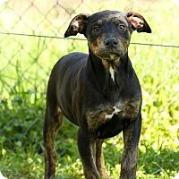 Adopt A Pet :: Adele - Auburn, CA