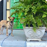 Adopt A Pet :: Effie - Homewood, AL