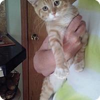 Adopt A Pet :: Tootsie - North Highlands, CA