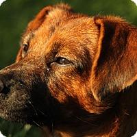 Adopt A Pet :: Laney - Minneapolis, MN