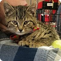 Adopt A Pet :: Franky - Fairborn, OH