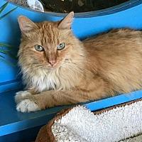 Adopt A Pet :: Precious - Topeka, KS